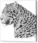 A Leopard's Watchful Eye Canvas Print