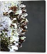 A Lichen Abstract 2013 Canvas Print