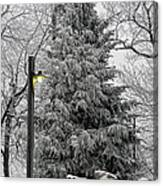 A Light Snow Canvas Print