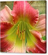 A Lily A Day Canvas Print