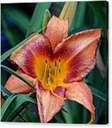 A Lily's Golden Heart Canvas Print