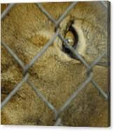 A Lions Eye Canvas Print