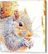 A Little Bit Squirrely Canvas Print