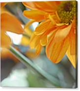 A Little Bit Sun In The Cold Time I Canvas Print