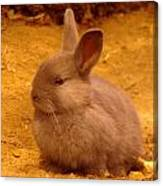 A Little Bunny Canvas Print