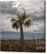 A Lonely Palm Tree Canvas Print