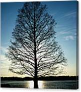 A Lonely Tree Canvas Print