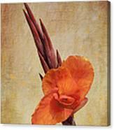 A Loving Gladiolus Canvas Print