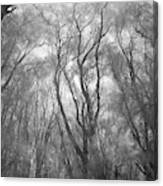 A Low Angle View Of A Ironwood Canvas Print