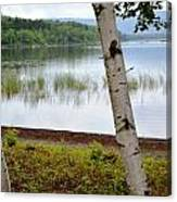 A Maine White Birch Pairing Canvas Print