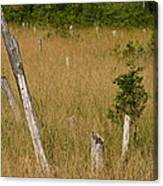 A Marsh In Maine Canvas Print