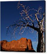 A Mesquite Trees And Buttes Canvas Print