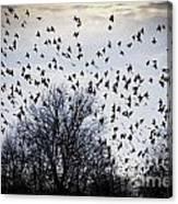 A Million Birds Canvas Print