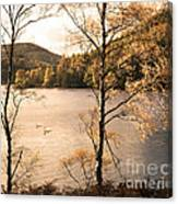 A Moment Of Gold Canvas Print