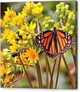 A Monarch Butterfly Canvas Print