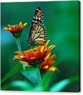 A Monarch Canvas Print