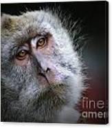 A Monkey's Look Canvas Print