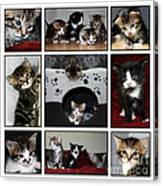 A Montage Of Kittens Canvas Print