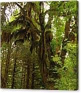 A Moss Covered Tree  In The Ho National Rain Forest Canvas Print