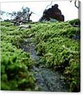 A Mossy Perspective Canvas Print