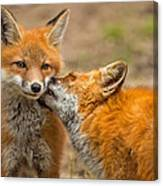 A Mother's Love Canvas Print