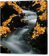 A Mountain Stream Carves A Path Canvas Print