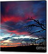 A Murmur Of Fuschia Canvas Print