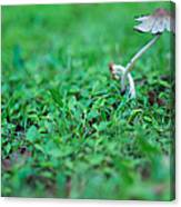 A Mushroom Sprouts Canvas Print