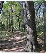 A Nature Walk Canvas Print