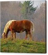 A November Horse Canvas Print