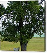 A One Horse Tree And Its Horse Canvas Print