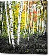 A Painting Autumn Birch Grove Canvas Print