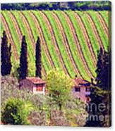 A Painting Tuscan Vineyard Canvas Print