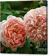A Pair Of Colette Roses Canvas Print