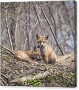 A Pair Of Cute Kit Foxes 2 Canvas Print