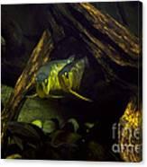 A Pair Of Fish Canvas Print