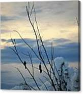 A Pair Of Melodious Blackbirds Canvas Print
