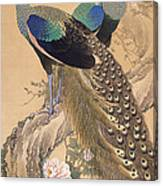 A Pair Of Peacocks In Spring Canvas Print