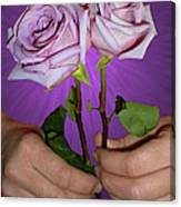 A Pair Of Purple Roses Canvas Print