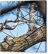A Pair Of Red-bellied Woodpeckers Canvas Print