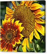 A Pair Of Sunflowers No.1 Canvas Print
