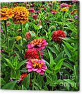 A Pair Of Yellow Zinnias 02 Canvas Print