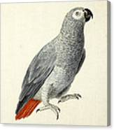 A Parrot Canvas Print