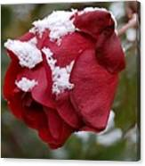 A Passing Unrequited - Rose In Winter Canvas Print