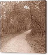 A Path In Life Canvas Print