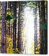 A Path In The Pines Canvas Print