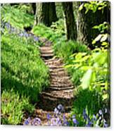 A Path Through An English Bluebell Wood In Early Spring Canvas Print