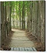 A Path To... Canvas Print