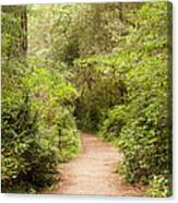 A Path To The Redwoods Canvas Print
