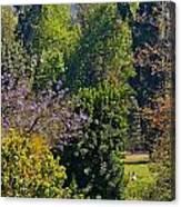 A Peek Through The Trees Canvas Print